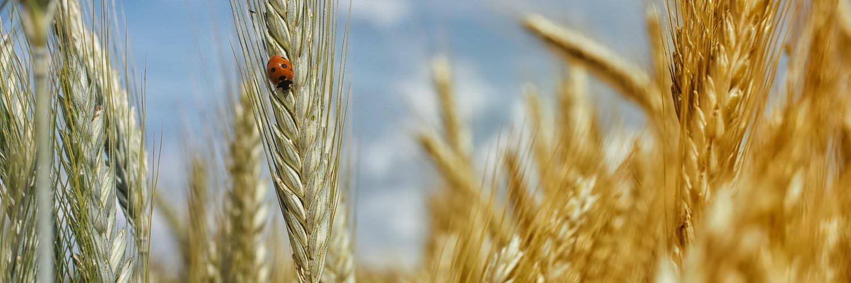 harvest01